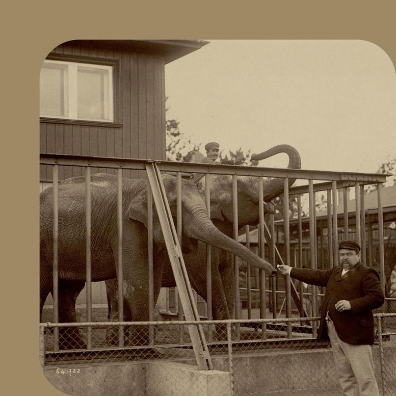 Посмотрите, как в 1894 году выглядел зоопарк в Петербурге — звери, люди, строени...