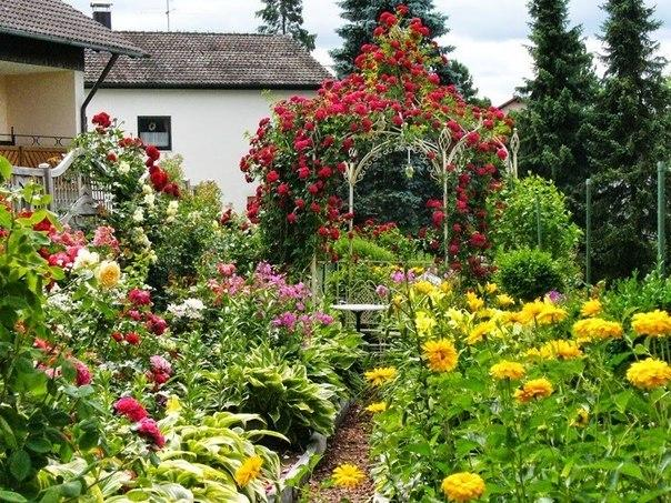 Цветочный рай на даче