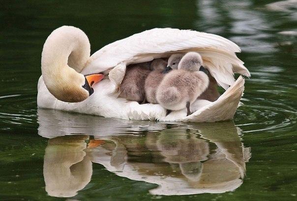 Будьте «Больше, чем Мамой»!
