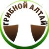 Грибной Алтай