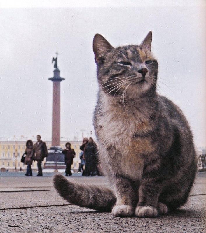 В Эрмитаже числятся более 50 котов.