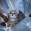 В добрые руки кошки.ЗАО.Москва