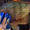 CraftFish – индустриальное рыбоводство.