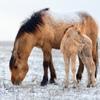 """Вятские лошади Природного парка """"Олений"""""""