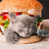 Cats In Food/Mixed Pets