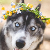 • Собаки - Символ Совершенства •