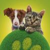 """Фонд помощи животным """"Всем Миром"""""""