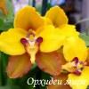 Орхидеи мира