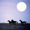"""Частная конюшня """"Лунная долина"""""""