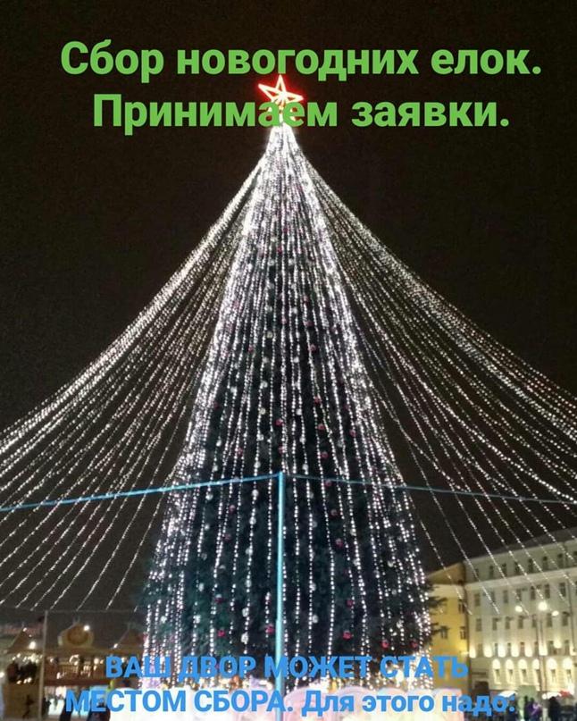 Сбор новогодних живых елок.