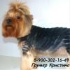 Стрижки собак икошек Воронеж (Квалифицир грумер)