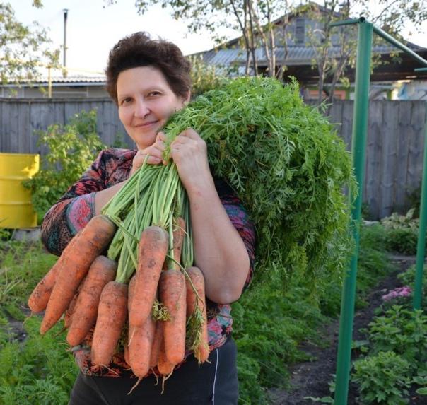 Я морковь сею следующим образом.  Морковь любит глубоко...