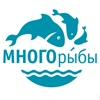МНОГОРЫБЫ СПб | Рыба • Икра • Доставка