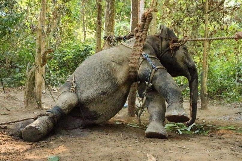 🆘 Почему катание на слонах - ужасная идея!