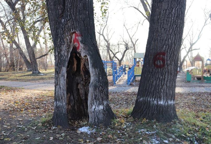 Заражённые деревья на острове Татышев посетят предупреждающими баннерами красного цвета.   На табличках будет написано: «Эти... [читать продолжение]