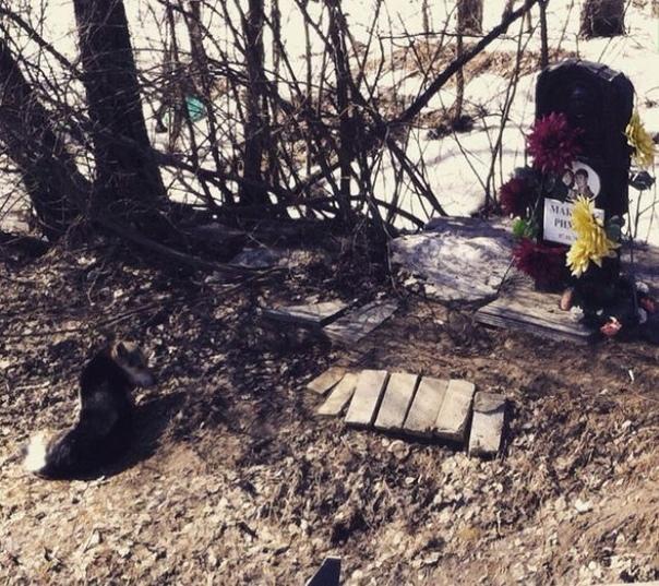 Подмосковный «Хатико» 15 лет сторожит памятник своим погибшим хозяевам