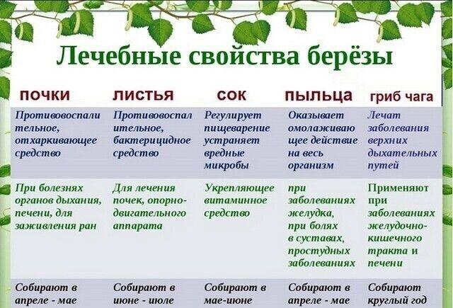 Рецепты использования сырья березы