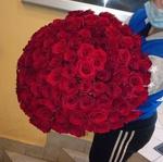 Роза Эксплорер 40 см