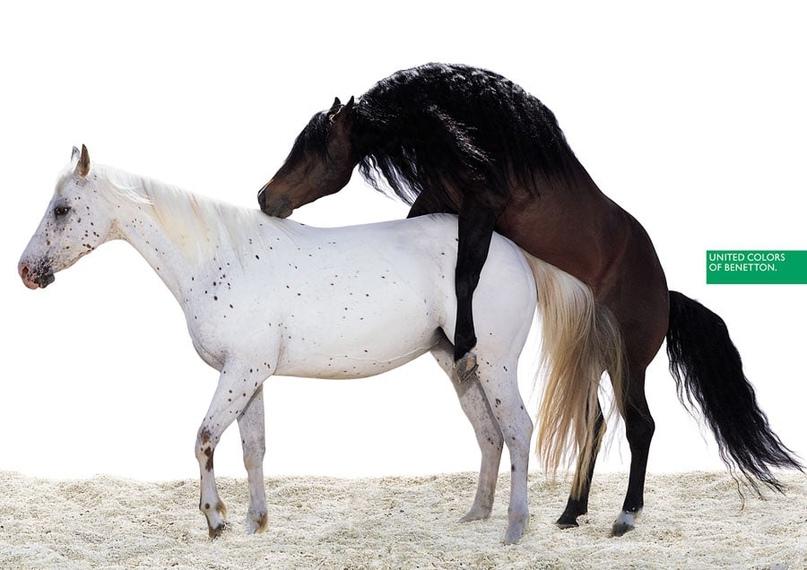 Еще один нашумевший принт 1996 года. Спаривание двух лошадей, белой и черной. Возмущению общественности не было предела. Однако идея, заложенная Тоскани, заключалась вовсе не в оскорблении морали или провокации. Животных, в отличие от людей...