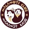 Malamut Club | Катание на собачьих упряжках