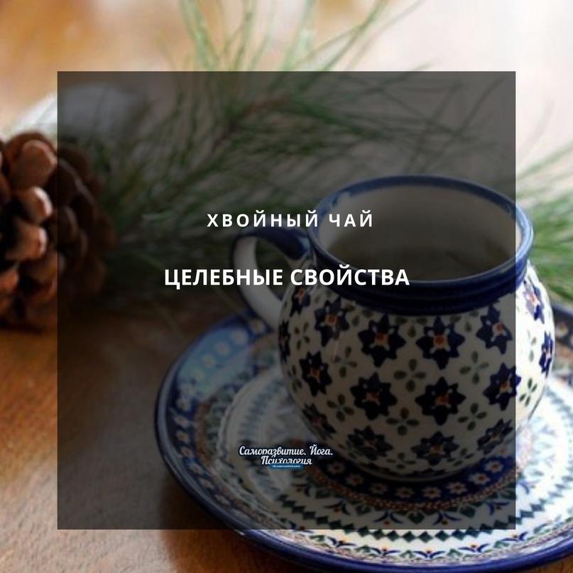 Целебные свойства хвойного чая