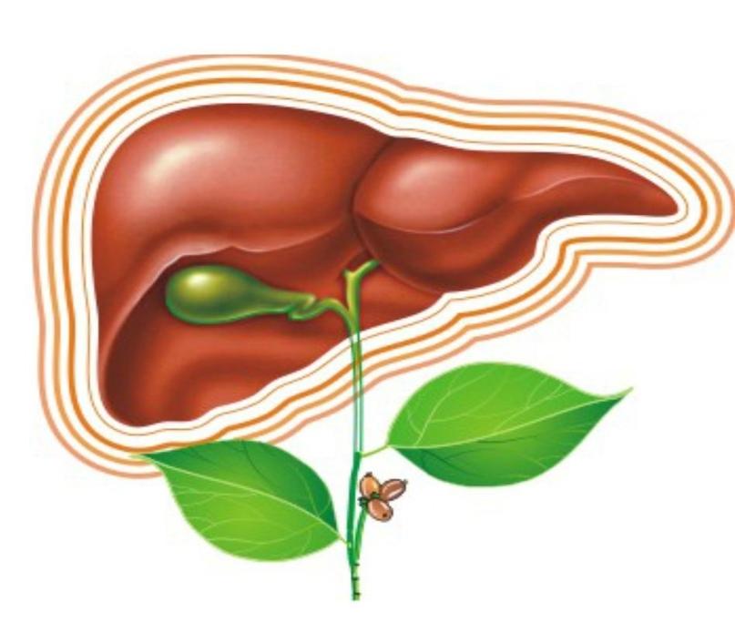 Лечим без таблеток заболевания печени и желчевыводящих путей.