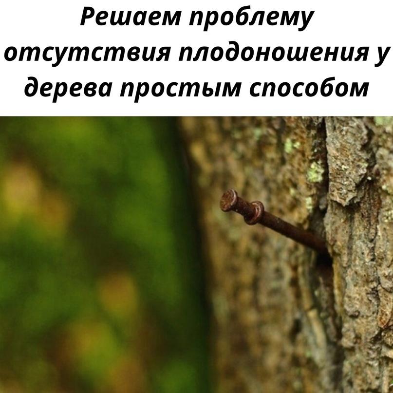 Деревья способны выслушивать, попробуйте припугните его, и оно начнёт плодоносить.🙂😊