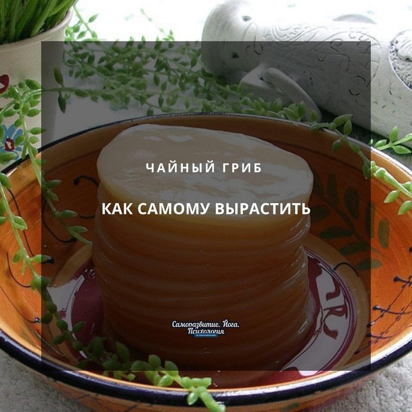 Как самому вырастить чайный гриб ☝🏻