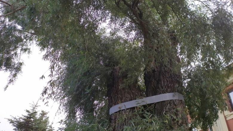 Оренбуржец отсудил 109 тыс. рублей за упавшее на автомобиль дерево