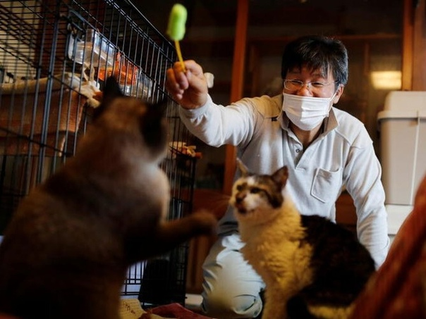 Мужчина остался в зоне отчуждения ради кошек. Японец...