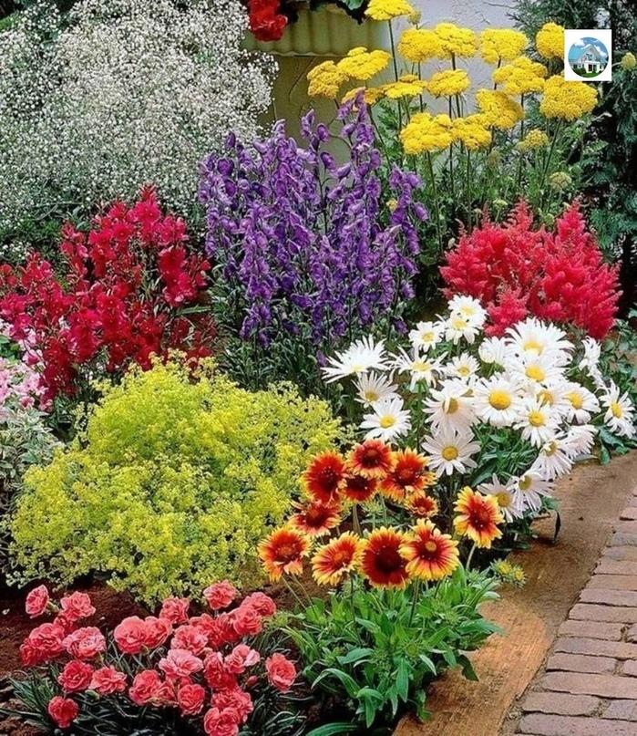 ☘Садовая фея - полезные советы и идеи для дачи, сада и огорода каждый день!