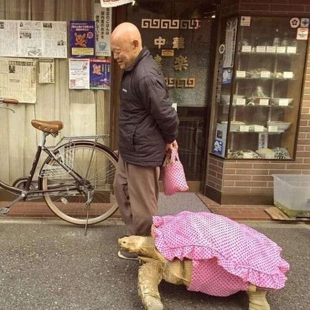 Мужчина ежедневно гуляет со своей черепашкой уже больше...