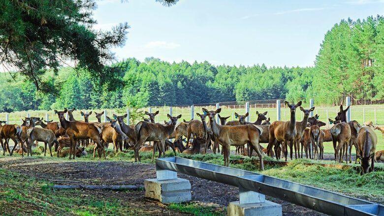 В Бугуруслане наказали мужчин, которые застрелили самку оленя