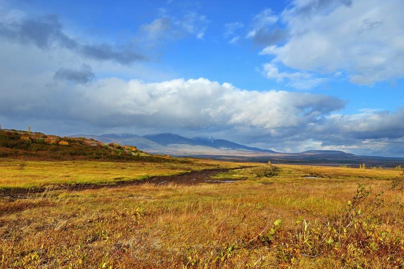 Россиянам начали бесплатно раздавать «арктические» гектары