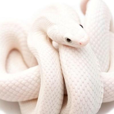 Змей Персунов