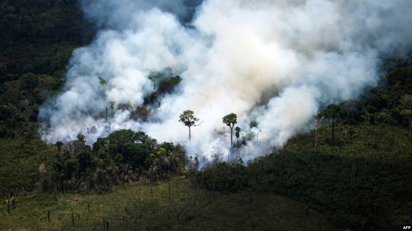 В мире в прошлом году были убиты более 200 активистов-экозащитников