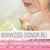 Стать суррогатной мамой, донором яйцеклеток