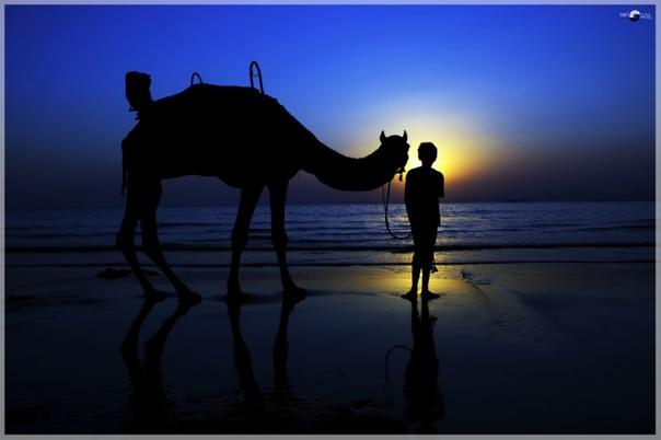 О верблюдах с душой