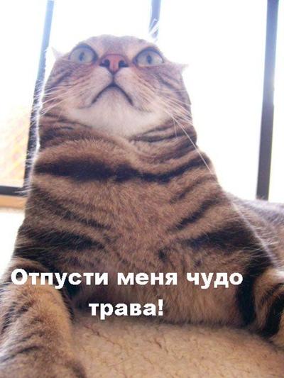 Михаил Астафьев, Томск