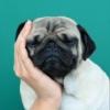 Толстые собаки и цитаты о любви