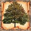 GEN-Tree. Генеалогическое древо семьи