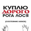 Скупка рогов лося оленя в Перми (Horns_Perm)