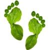 Gamak Foot
