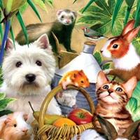 Домашние животные | Объявления