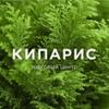 ТЦ Кипарис | Иркутск