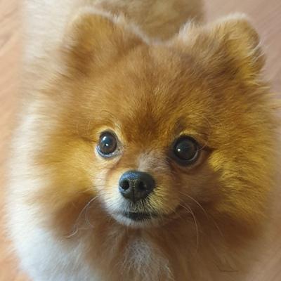 Пёс Лёва