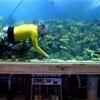 Fish-SPA: Аквариумы, изготовление и обслуживание