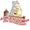 Клуб элитных кошек Алиса Коломна