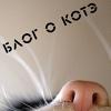 Муркоте - Блог о котэ