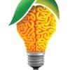 Экология мозга